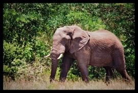 Elephant in Hwange National Park, Zimbabwe