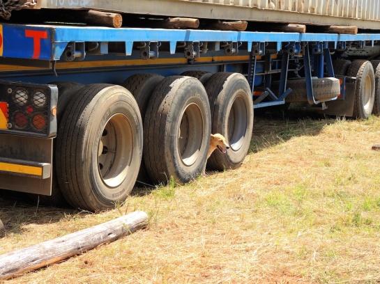 Leo hides between the wheels