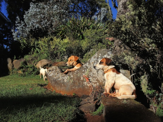 Petra, Leo and Huckle, Hornbydale