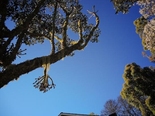 Treescape in Hornbydale Garden