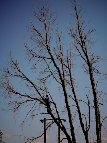Mr Tendai tree cutting