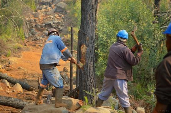 Two axe-men start work creating the hinge