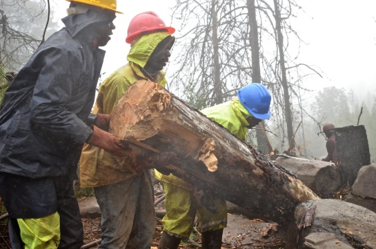 Saving the log for fire wood later
