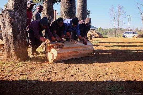 Very heavy wood logs