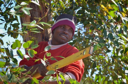 In the tree tops with spirit level!
