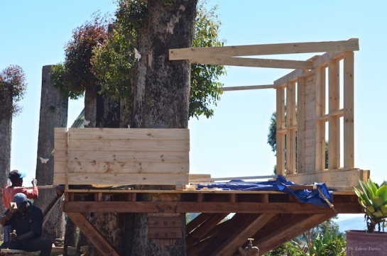 Tree house walls start to go up