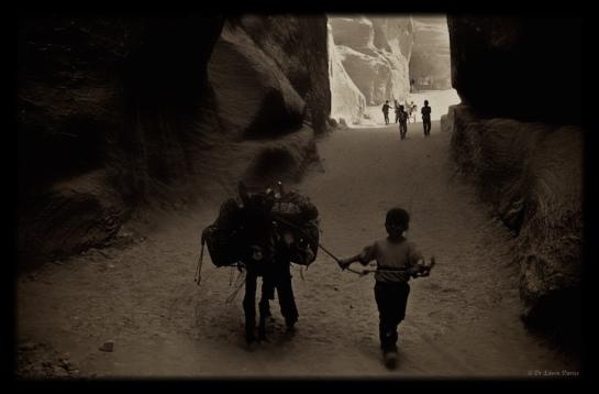 Eastern Highlander in Petra