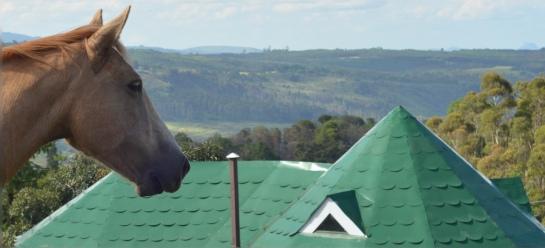 Horses at Hornbydale