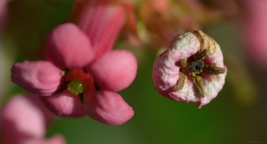 Insect pollinated flowers, Troutbeck, Zimbabwe