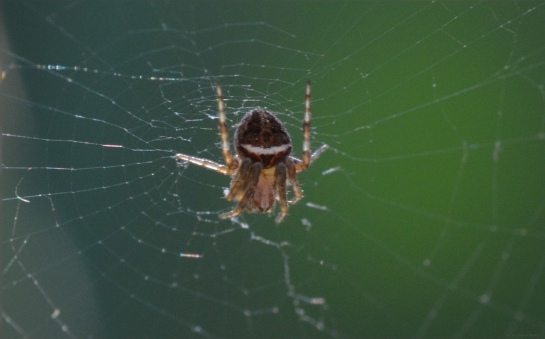 A spider with a sense of humour