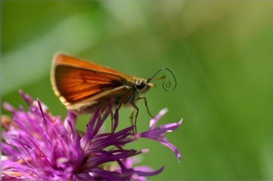 Stockalperweg flora et fauna