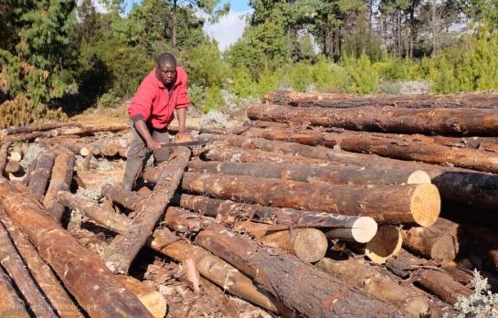 De-barking pine poles