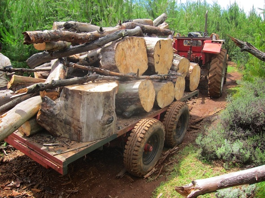 """Being tower by 'Hurler"""" our essential MF690 4WD tractor from 1985"""